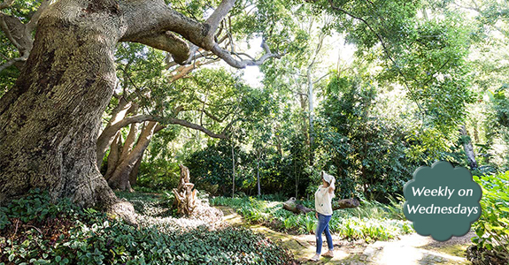 WEEKLY GUIDED GARDEN TOURS